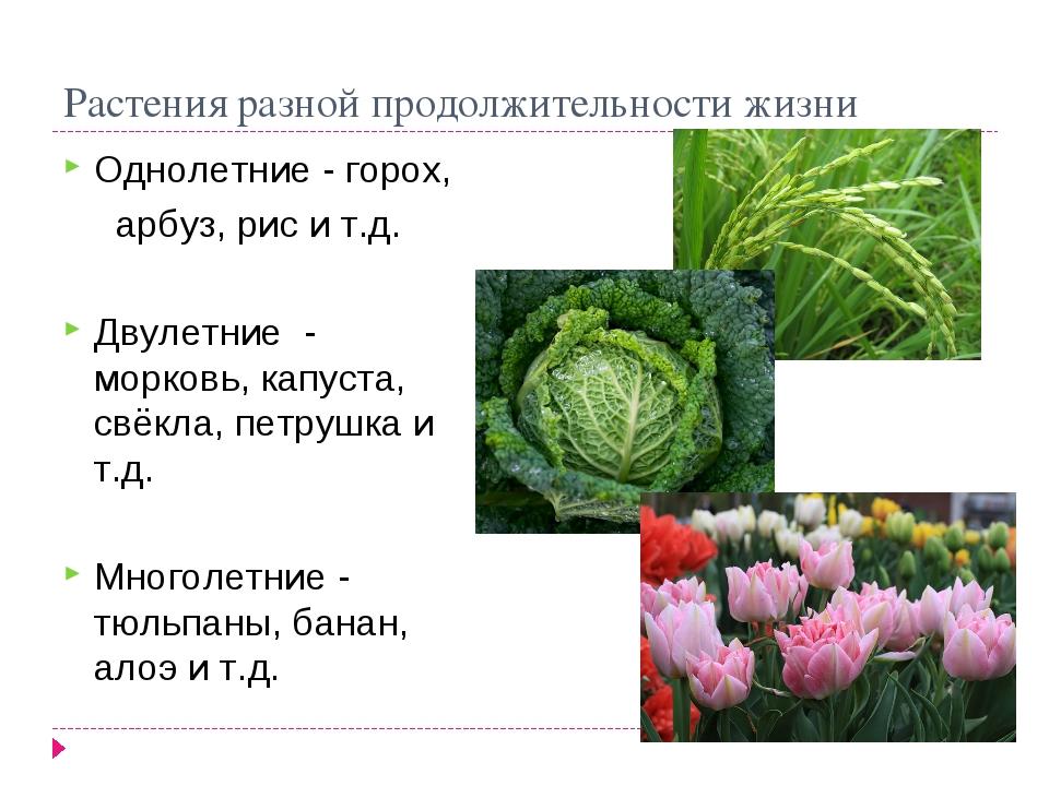 Растения разной продолжительности жизни Однолетние - горох, арбуз, рис и т.д....