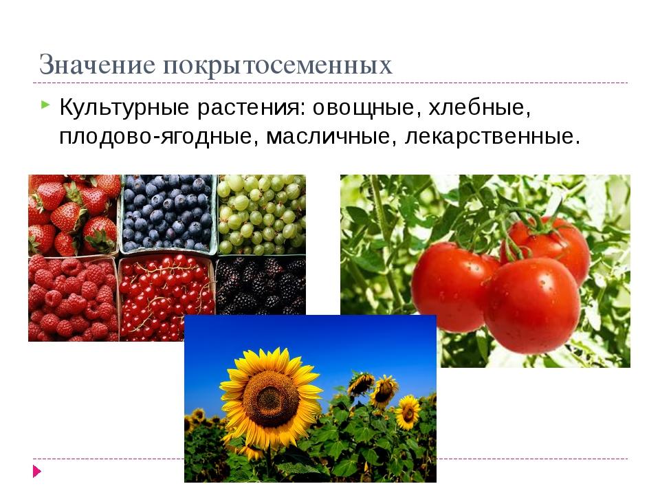 Значение покрытосеменных Культурные растения: овощные, хлебные, плодово-ягодн...