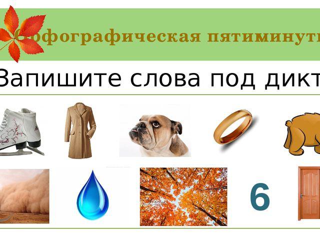 Орфографическая пятиминутка Коньки, пальто, бульдог, кольцо, медведь, пыль, к...