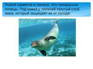 Рыбой кормятся и тюлени. Это прекрасные пловцы. Под кожей у тюленей толстый с