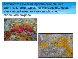 Арктическая пустыня практически лишена растительности. Здесь нет кустарников.