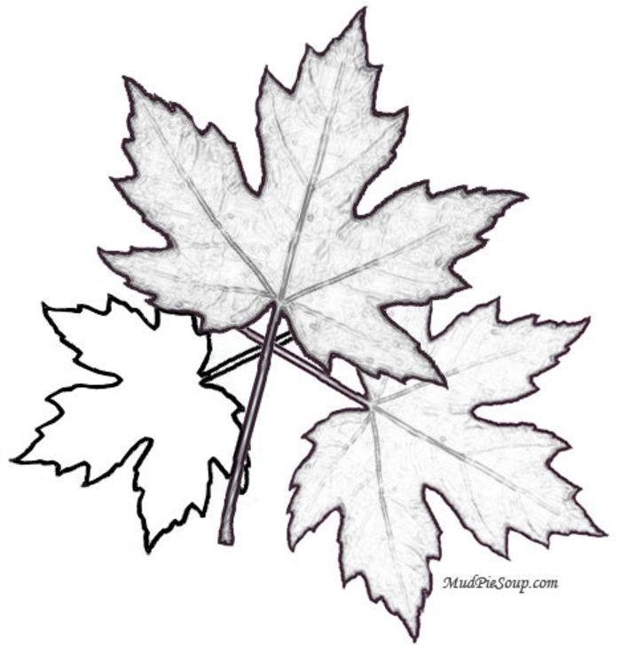 C:\Users\Катерина\Desktop\printable-coloring-sheets-maple-leaves-printable-leaf-fall-coloring.jpg