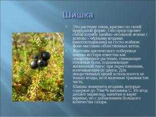 Это растение очень красиво по своей природной форме. Оно представляет собой к