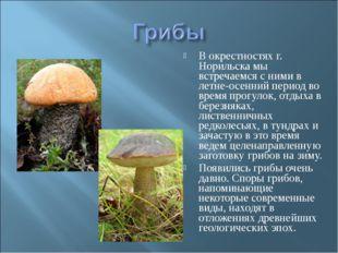 В окрестностях г. Норильска мы встречаемся с ними в летне-осенний период во в