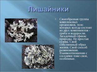 Своеобразная группа комплексных организмов, тело которых всегда состоит из дв