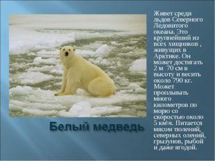 Живет среди льдов Северного Ледовитого океана. Это крупнейший из всех хищнико