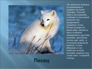 Это животное чемпион по выживанию в ледяных пустынях Арктики. Плотная шерсть