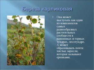 Она может выступать как один из компонентов самых разнообразных растительных