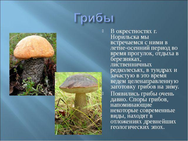 В окрестностях г. Норильска мы встречаемся с ними в летне-осенний период во в...