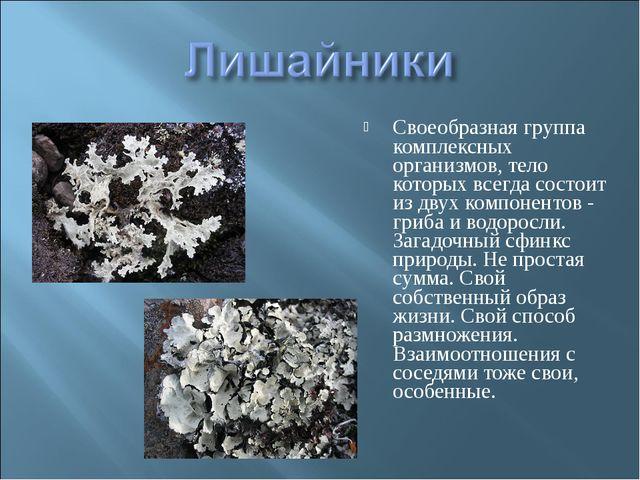 Своеобразная группа комплексных организмов, тело которых всегда состоит из дв...