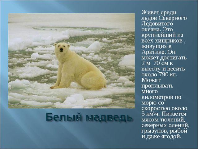 Живет среди льдов Северного Ледовитого океана. Это крупнейший из всех хищнико...