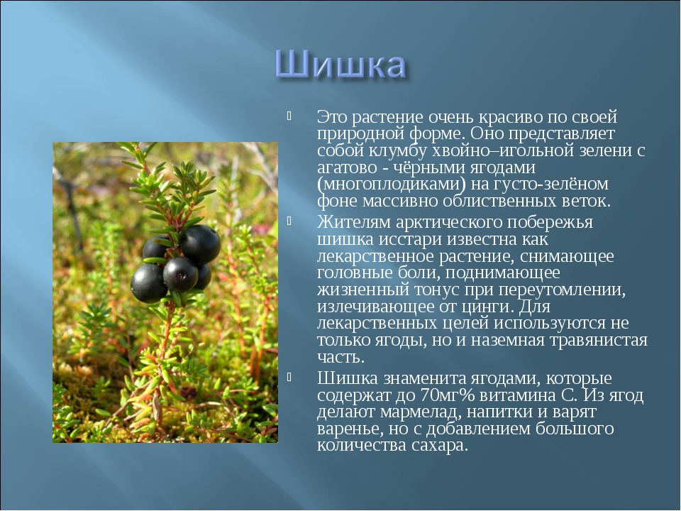 Это растение очень красиво по своей природной форме. Оно представляет собой к...
