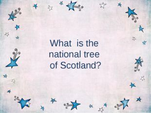 What is the national tree of Scotland?