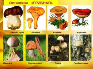Белый гриб Лисички Рыжики Сыроежки Маслята Подосиновик Опята Подберёзовик Ос