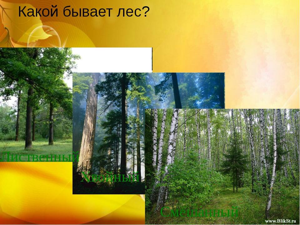 Какой бывает лес? Лиственный Хвойный Смешанный