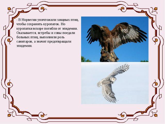 - В Норвегии уничтожили хищных птиц, чтобы сохранить куропаток. Но куропатки...