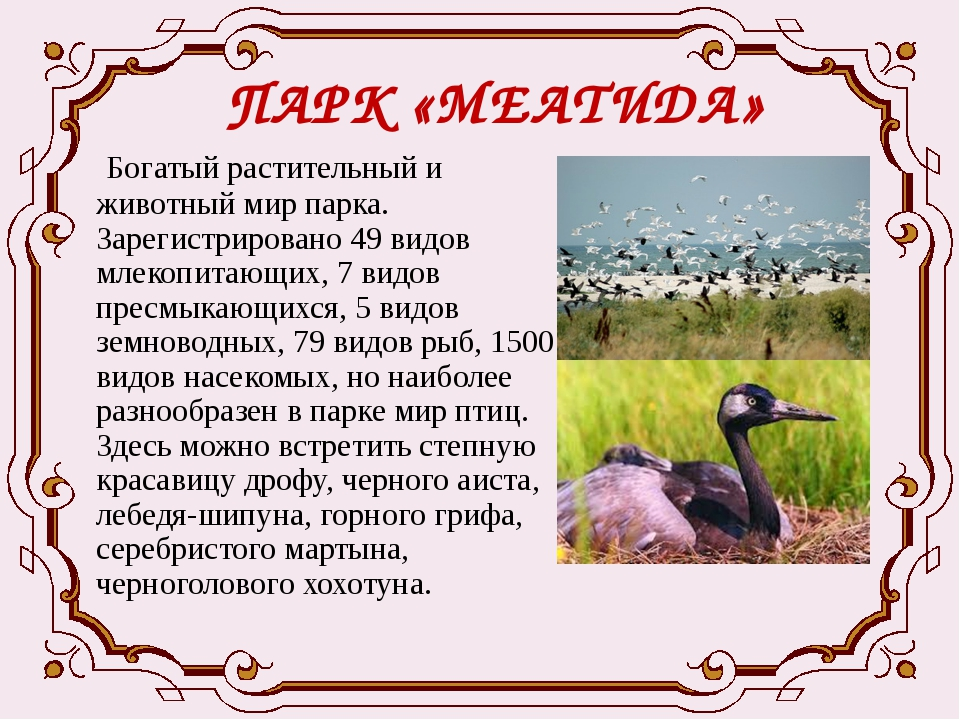 ПАРК «МЕАТИДА» Богатый растительный и животный мир парка. Зарегистрировано 49...