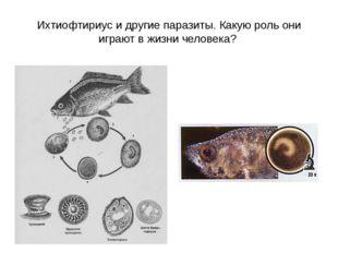 Ихтиофтириус и другие паразиты. Какую роль они играют в жизни человека?