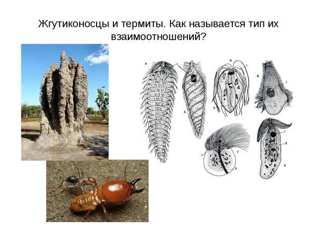 Жгутиконосцы и термиты. Как называется тип их взаимоотношений?