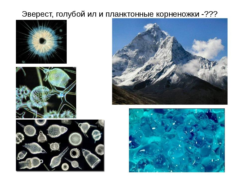 Эверест, голубой ил и планктонные корненожки -???