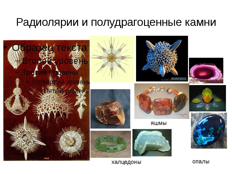 Радиолярии и полудрагоценные камни опалы халцедоны яшмы яшмы
