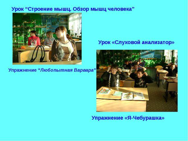 """Урок """"Строение мышц. Обзор мышц человека"""" Упражнение """"Любопытная Варвара"""" Уро..."""