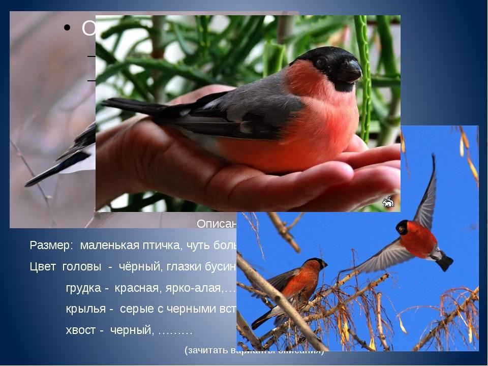 Описание снегиря. Размер: маленькая птичка, чуть больше воробья Цвет головы...