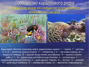 Сообщество кораллового рифа По богатству видов это сообщество уступает только