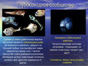 Глубоководное сообщество Одними из самых удивительных морских обитателей явля