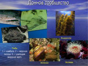 Донное сообщество Рыбы 1 — камбала; 2 — морская лисица; 3 — удильщик (морской