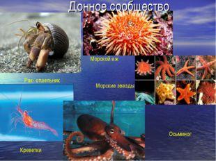 Донное сообщество Рак- отшельник Креветки Морской еж Морские звезды Осьминог