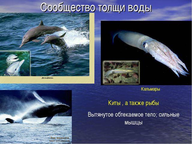 Сообщество толщи воды Кальмары Киты , а также рыбы Вытянутое обтекаемое тело;...