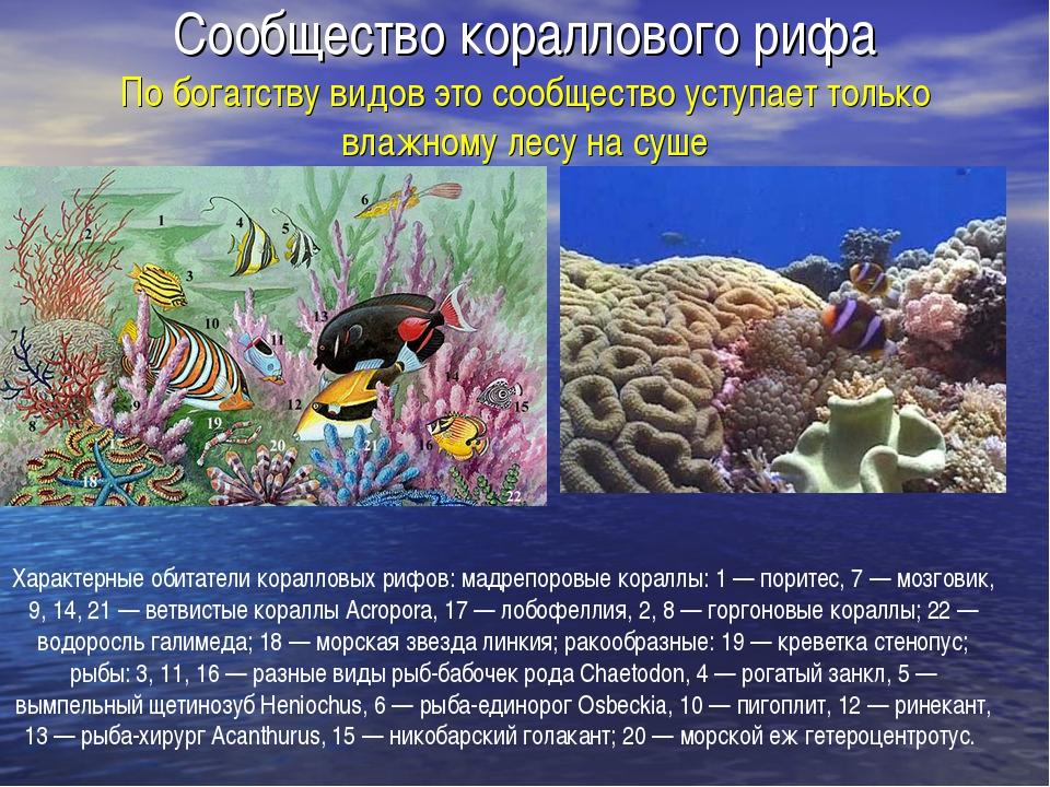 Сообщество кораллового рифа По богатству видов это сообщество уступает только...