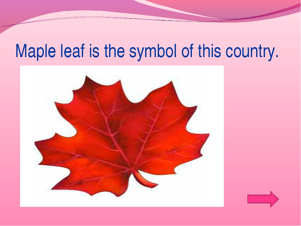 Maple leaf is the symbol of this country.