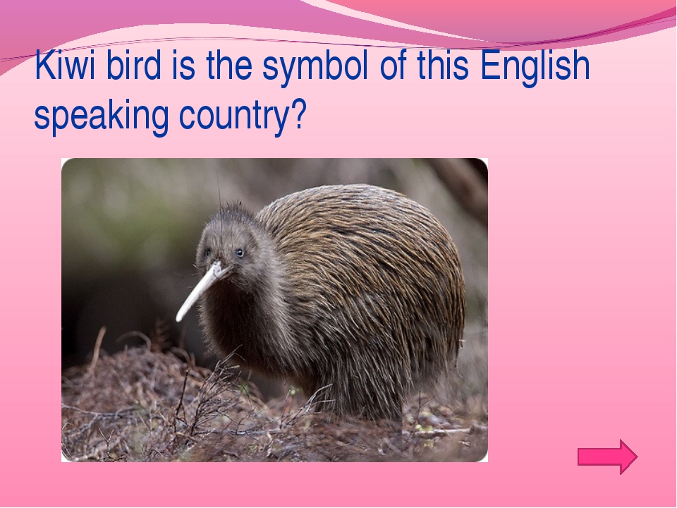 Kiwi bird is the symbol of this English speaking country?