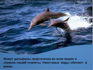 Живут дельфины практически во всех морях и океанах нашей планеты. Живут дельф