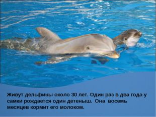 Живут дельфины около 30 лет. Один раз в два года у самки рождается один детен