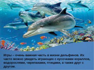 Игры – очень важная часть в жизни дельфинов. Их часто можно увидеть играющих