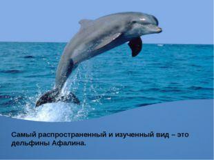Самый распространенный и изученный вид – это дельфины Афалина.