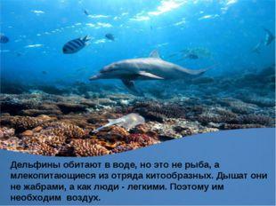 Дельфины обитают в воде, но это не рыба, а млекопитающиеся из отряда китообра