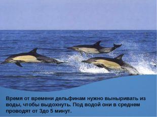 Время от времени дельфинам нужно выныривать из воды, чтобы выдохнуть. Под вод