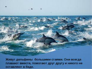 Живут дельфины большими стаями. Они всегда плавают вместе, помогают друг друг