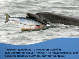 Питаются дельфины в основном рыбой и кальмарами. Их зубы и челюсти не предназ