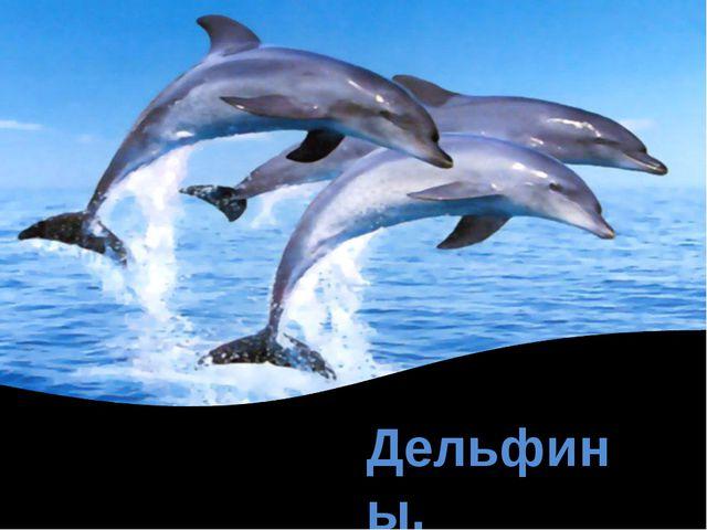 Дельфины.
