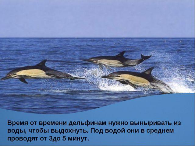 Время от времени дельфинам нужно выныривать из воды, чтобы выдохнуть. Под вод...