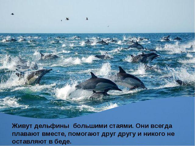 Живут дельфины большими стаями. Они всегда плавают вместе, помогают друг друг...