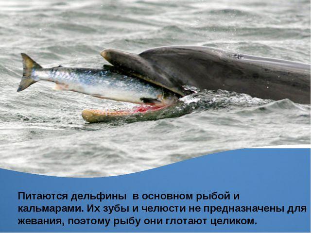 Питаются дельфины в основном рыбой и кальмарами. Их зубы и челюсти не предназ...