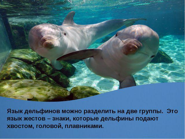 Язык дельфинов можно разделить на две группы. Это язык жестов – знаки, которы...