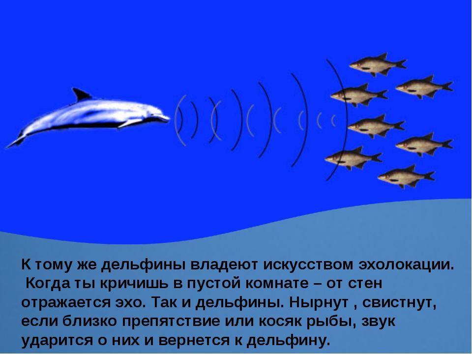 К тому же дельфины владеют искусством эхолокации. Когда ты кричишь в пустой к...