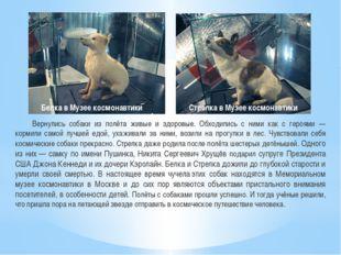 Вернулись собаки из полёта живые и здоровые. Обходились с ними как с героями